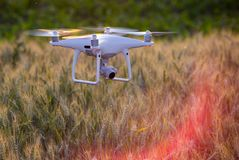 Drone flying above wheat field and mapping Royalty Free Stock Image