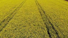 Drone flying across yellow oilseed stock footage