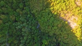 Drone flying forward above beautiful green forest. Aerial flyover topview shot of early autumn treetops. Drone flying forward above beautiful green forest stock footage