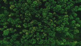 Drone flying forward above beautiful green forest. Aerial 4K flyover topview shot