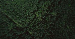 Drone flying forward high above lush green forest. Aerial 4K topview vertical shot of evergreen trees and lonely trail. Drone flying forward high above lush stock video