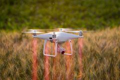 Drone flying above wheat field and mapping Royalty Free Stock Photo