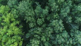 The drone is flying over the forest. View from above.4k UHD stock video