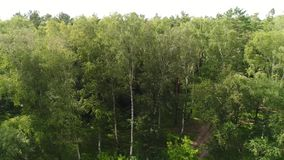The drone is flying over the forest. View from above.4k UHD stock video footage