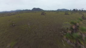 Drone flying over jungle Savanna in Central America. Footage stock video