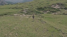 Drone flying over a woman who walks on the field in Tre Cime di Lavaredo. stock video footage