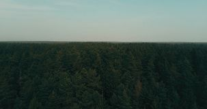 Drone flying forward over evergreen forest. Aerial 4K flyover topview shot of dramatic dark green lush treetops. Drone flying straight forward above lush stock video