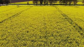 Drone flying to the road above beautiful rape field stock footage