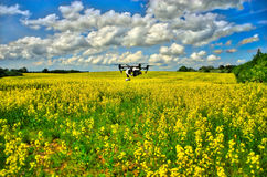Drone flyving over field. DJI Inspire flying over rapeseed field and skin in the background Stock Images