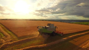 Drone footage of golden fields and combine harvester stock video