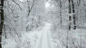 Snow covered road in a forest stock footage