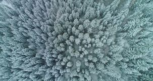 Drone footage snow covered trees, winter nature beautiful Europe aerial view pine forest mountain, season travel white frozen natu stock video