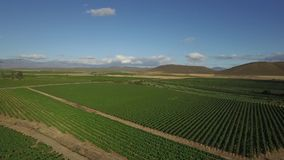 Drone footage of a vineyard stock video