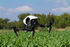 Drone hovering low over green plantation Royalty Free Stock Photos