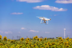 Drone hovering over sunflower field Stock Photography