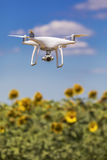 Drone hovering over sunflower field Royalty Free Stock Photo