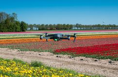 Drone hovering over a tulip field Stock Images