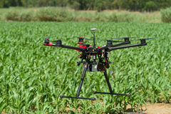 Drone hovering over young corn plantation Stock Photo