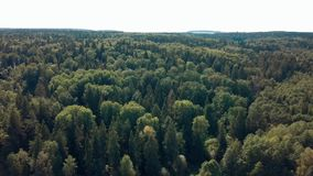 Drone flies above the forest stock video footage