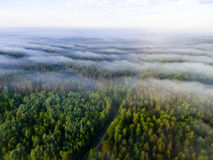Drone image. aerial view of morning mist over green forest. In summer with sunrise and rays of light Stock Photos