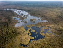 Drone image. aerial view of swamp lake. In cloudy spring day. latvia stock photos