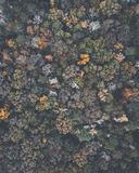 Drone image of a multicolored forest in the Southeastern United States with fall foliage. This was shot in rural Alabama with rolling hills. This birds eye stock image