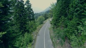 Drone 4k shoting of the road among pine forest. Drone 4k shoting of the asphalt road among green trees in forest. Top down view on the road in pine forest in stock video footage