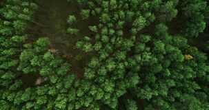 drone landscape view green forest goal perspective