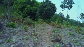 Drone Motion over Rocky Ground Surface against Tropical Woods stock footage