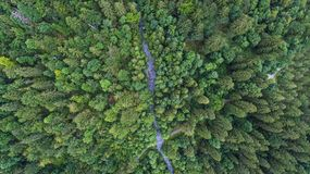 Drone over head shot of a lush green alpine forest in summer. A path crosses the forest as seen from this unique angle stock photos