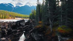 Drone panorama of the gorge with a Athabaska Waterfall and a coniferous forest Athabaska River, Alberta, Canada