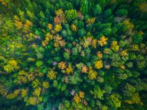 Drone photo of colorful trees in Lithuania, Europe royalty free stock photos