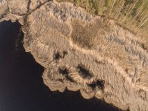 Drone photography- beautiful view of reeds growing in water on coast of lake in Latvia. royalty free stock photos