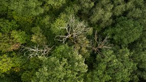 Drone photography of dead trees in a forest stock photos