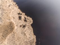 Drone photography - reeds in sunlight of sunset on coast of lake