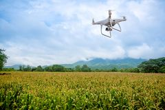 The drone with professional camera takes pictures of the corn farm. UAV drone copter flying with digital camera.Drone with high resolution digital camera royalty free stock image