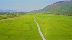 Drone Rises Over Road among Rice Fields by Mountains. Drone rises over ground road among enormous green rice fields near farm village against sky and mountains stock video