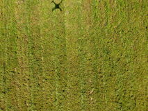 Drone shadow on the grass stock images
