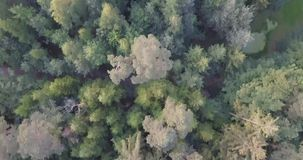 Drone shot aerial straight down top view fly over mixed at summer. Drone shot aerial straight down top view fly over mixed stock video