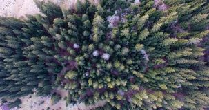 Travel, trip, summer and landscape concept - drone shot of aerial view to green forest trees. Drone shot of aerial view to green forest trees travel, trip stock video footage