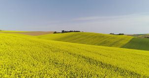 Scenic view of canola field against sky