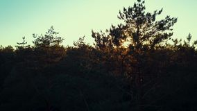 Drone shot of a sunset in summer forest. Beautiful aerial drone shot of a sunset in summer forest stock video footage