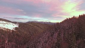Aerial View Of Winter Forest At Beautiful Sunset. stock video footage
