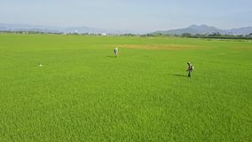 Drone Shows Local Men Sprinkling Field against Pests by Hills. NHA TRANG, KHANH HOA/VIETNAM - JUNE 20 2017: Drone shows local men in special costumes sprinkling stock footage