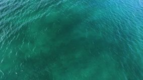 Turquoise water taken by a drone. A drone that is tilt down captures the turquoise water. Coral reefs are seen underwater stock video
