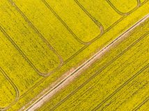 Drone aerial view of yellow oilseed rape field royalty free stock images