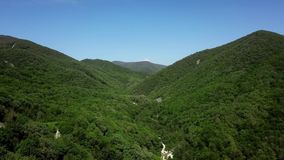Aerial green pine forest in caucasian mountains, Russia stock video