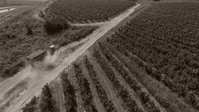 Truck among rows of vineyard before harvesting. Drone tracking a truck full of grapes driving among vineyard stock video