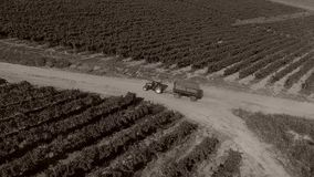 Truck among rows of vineyard before harvesting. Drone tracking a truck full of grapes driving among vineyard stock video footage