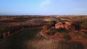 Drone video - flying over an italian vineyard. Tuscany Italy stock video